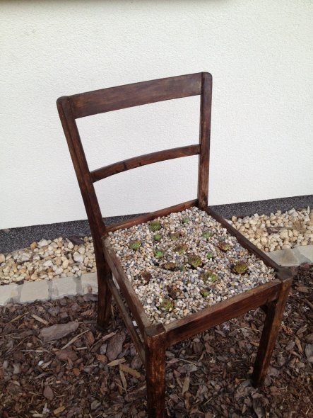 tipp von kietzemater bepflanzter stuhl zimmerschau. Black Bedroom Furniture Sets. Home Design Ideas