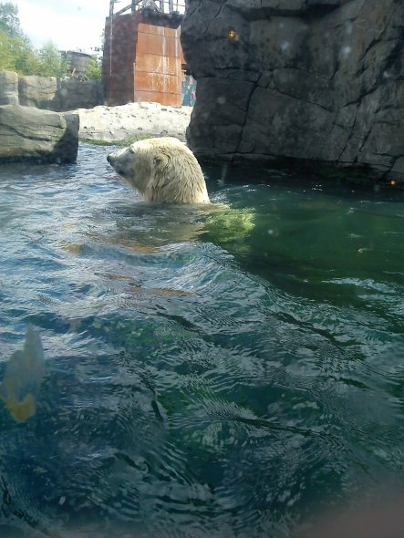 Hobbyraum 'Ausflug Hannover Zoo'