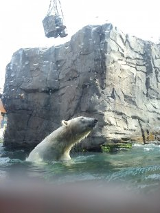 Ausflug Hannover Zoo