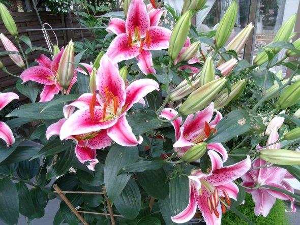 Garten 'Mein Gärtchen'