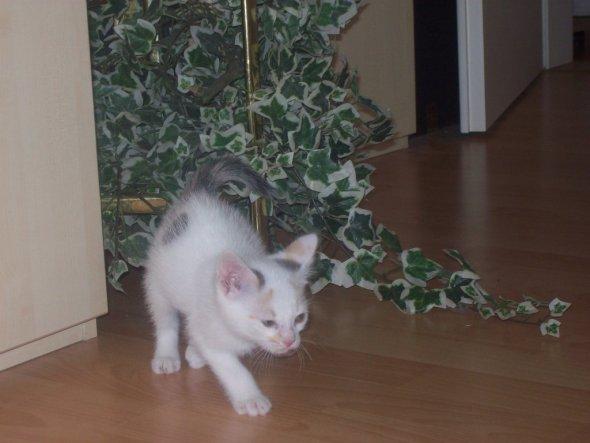 Haustiere 'Meine Katze Schnecke und meine kleine Mautschi'