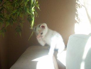 Meine Katze Schnecke und meine kleine Mautschi