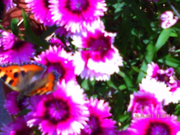 Ein Schmetterling:))