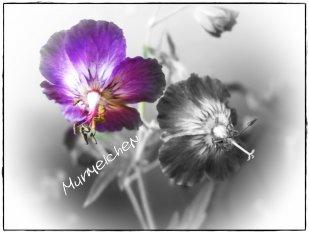 ♥ Ƹ̵̡Ӝ̵̨̄Ʒ ♥ Murmelchens Fotowerkstatt♥ Ƹ̵̡Ӝ̵̨̄Ʒ ♥