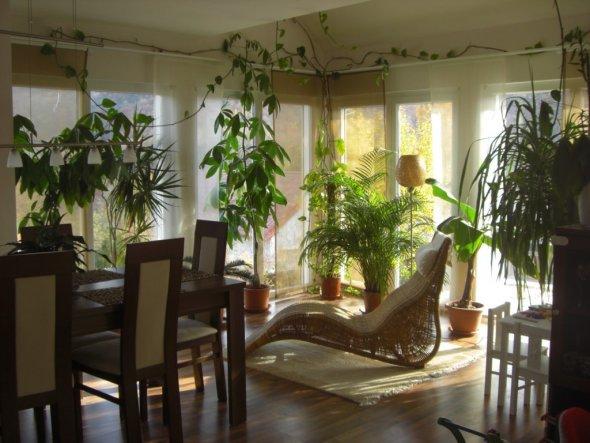 Wohnzimmer \'unser Wintergarten\' - unser Haus am Hang - Zimmerschau