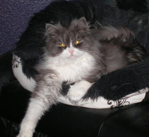 Sein lieblings schlafplatz