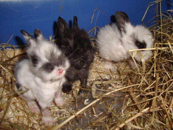 Haustiere 'Unsere kleine Farm'