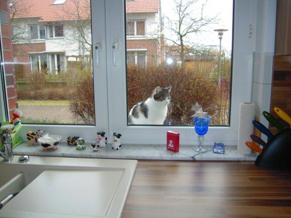 die Nachbarskatze findet unsere Küche auch ganz schön ;-))