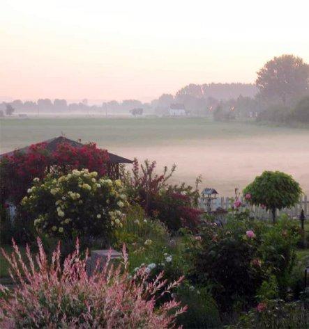 Nebelfelder und unsere Rosen im Garten