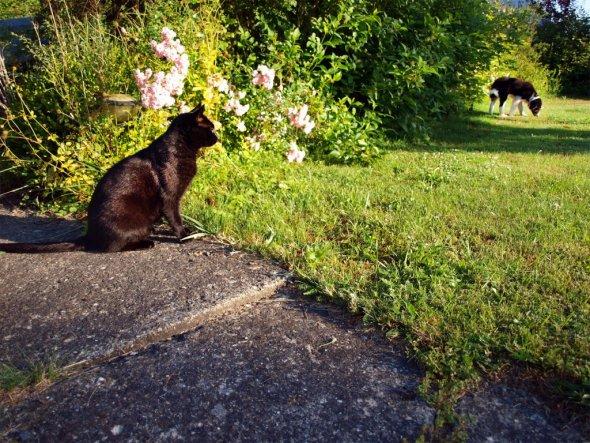 Kater und Welpe im Garten