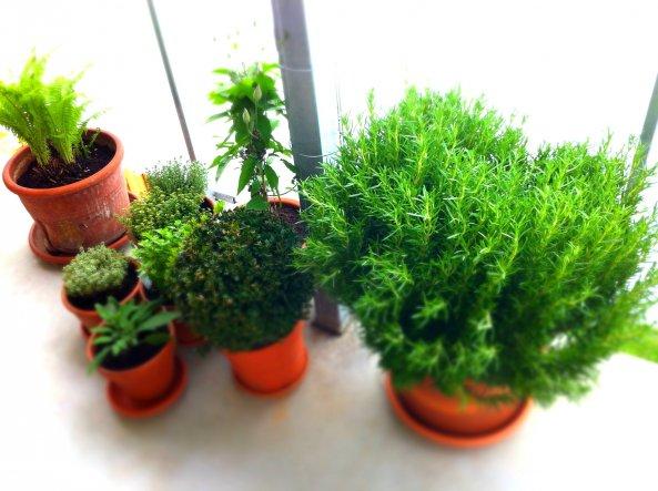 Ende April 2012. Langsam wirds wieder grün auf meinem Balkon.