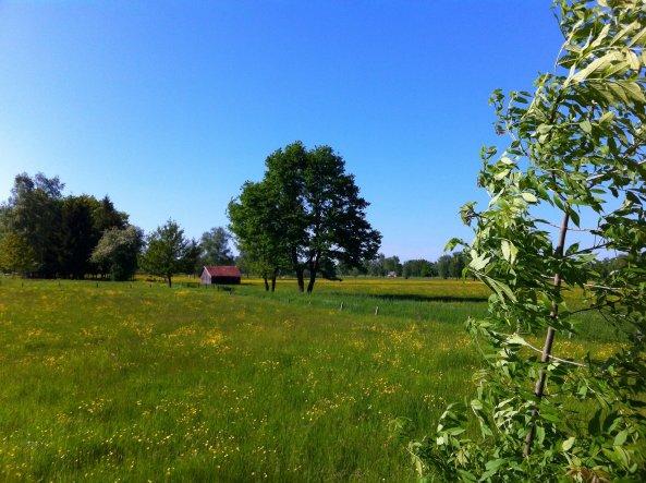 Garten 'Umgebung'