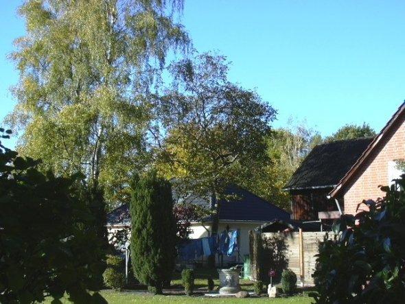 Vorgarten mit Baumbestand