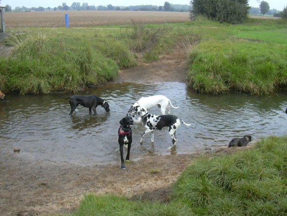 Gassi gehen mit anderen Hunden macht Spaß