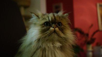 Haustiere 'Meine Katze'