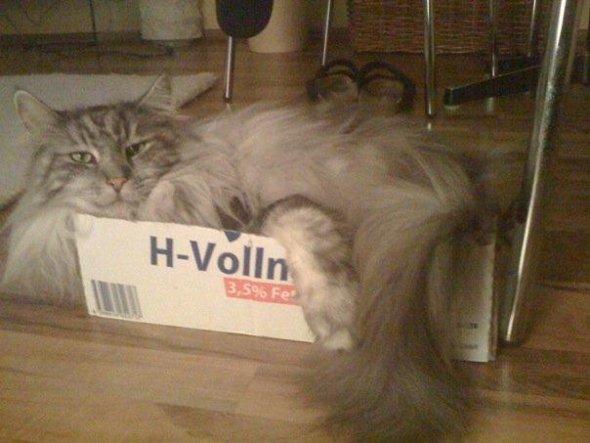 er liebt Kartons...auch wenn er gerade zur Hälfte reinpasst ;-)