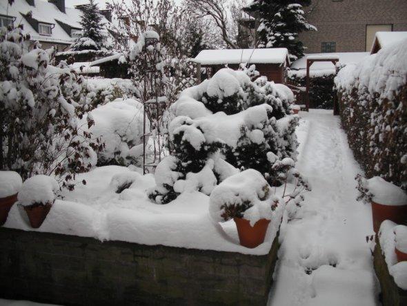 Garten 'Mein verschneiter Garten Winter 2010/2011'