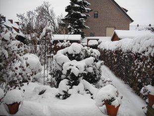 Mein verschneiter Garten Winter 2010/2011