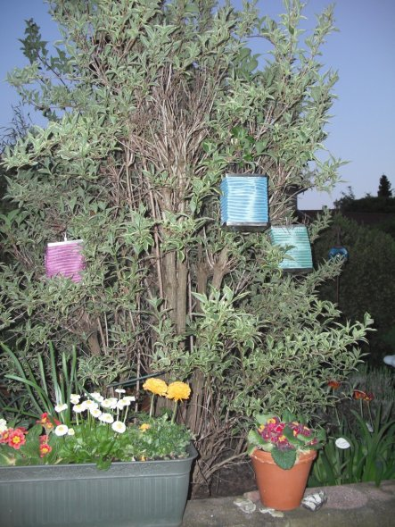 Garten 'Frühling 2011'