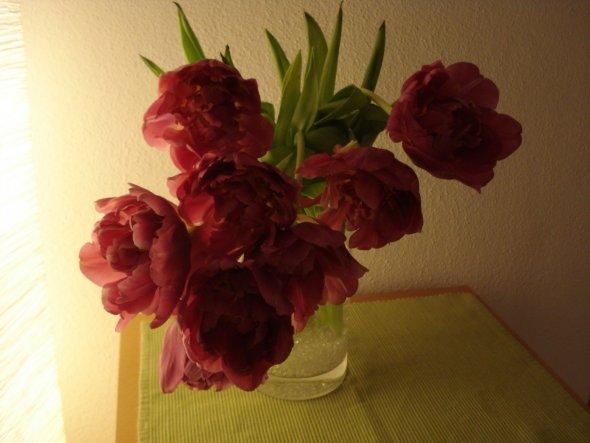 Gefüllte Tulpen, ein Traum.