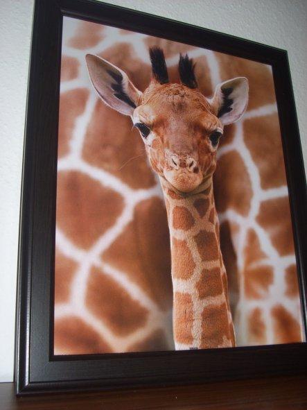mein zweites, kürzlich erworbenes Giraffen Bild. Ich liebe Giraffen :)