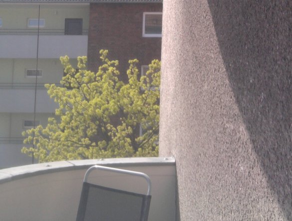 Hausfassade / Außenansichten 'Bäumchen'