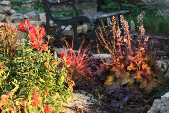 Herbst 201 - nochmal das rote Beet