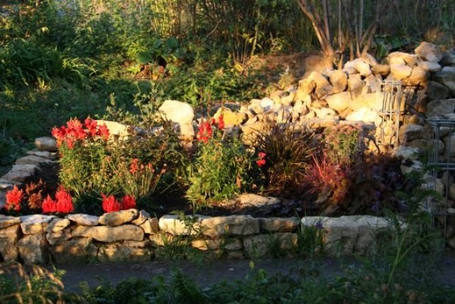 Herbst 2011 - das rote Beet neben dem Sitzplatz