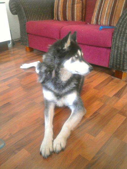 das ist Unser Hund Gismo ..ganze 15 kg leichter ..Anordnung vom Tierarzt.
