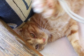 Haustiere 'Katzis'