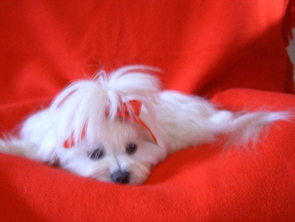 Das ist mein kleines Mädchen Camilla.Dieses Foto mit der roten Decke und Schleife habe ich zu Valentinstag gemacht.