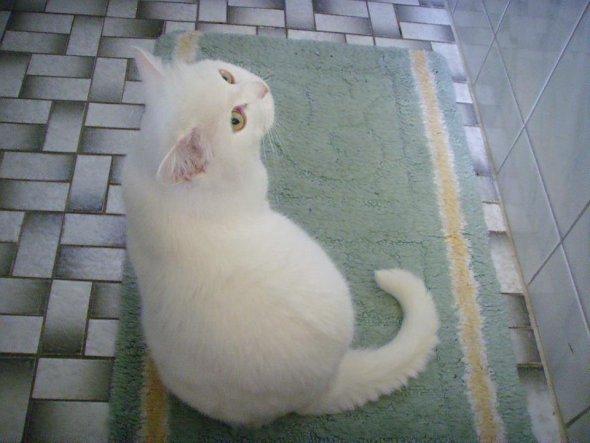 Haustiere 'Unsere kleine persische Prinzessin'