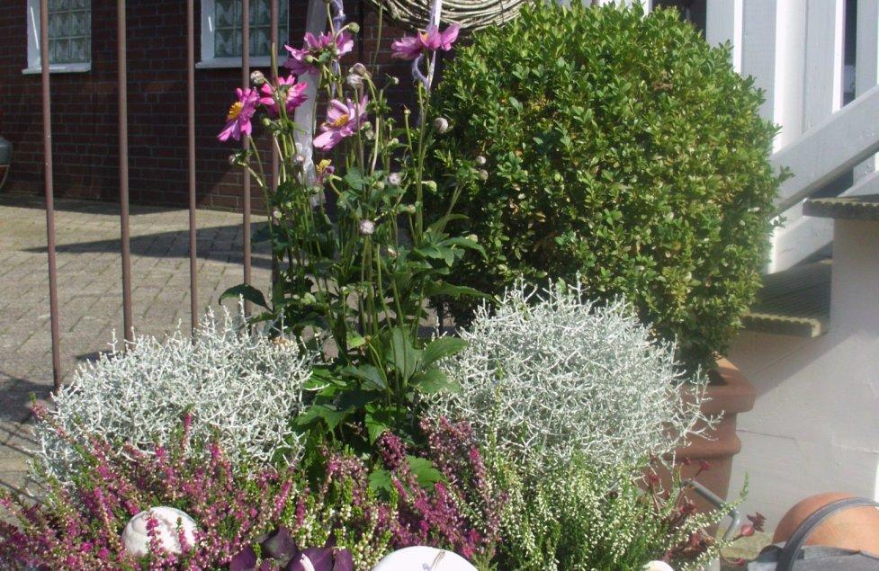 Garten und Balkon von uweluckas