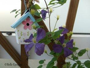 Blumenzimmer