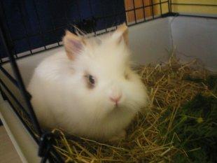 Unser Kaninchen Flocke
