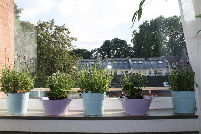 Ich liebe pastellfarben und den Duft von Lavendel am abend! Ich hoffe die anderen Blümchen blühen auch bald  :-)