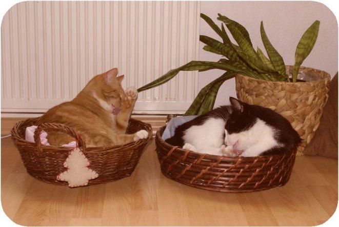 Haustiere 'Katzenkörbchen'