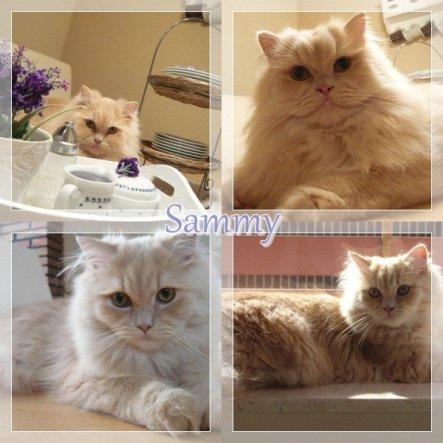 Haustiere 'Mein Sammy'