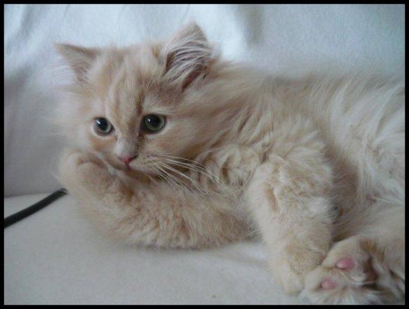 Haustiere 'Mein kleiner (B)engel'