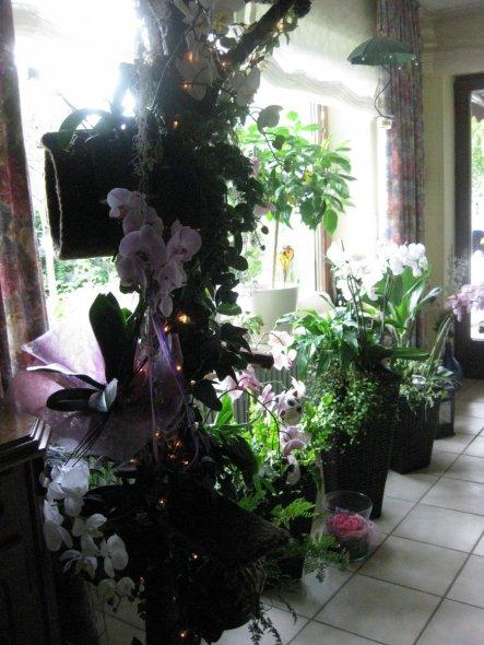 Not macht erfinderisch. Und da ich praktisch veranlagt bin, wollte ich Katzenaussichtspunkt und Orchideenbaum miteinander verbinden. Seht selbst: ist