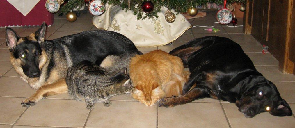 Dreamteam: Schäferhündin Kiki, Tigermädel Lisa, Balou und Bingo verstehen sich sehr gut.