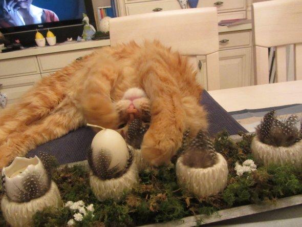 """Oberkatzengeil - Vogelfedern hat Frauli hier verarbeitet. Und die """"Eierständerchen"""" sind mit Wolle umwickelt. Welch´ tolle Kombination ;-)."""