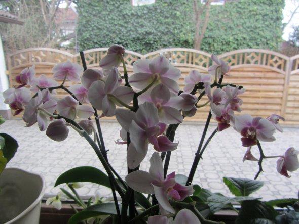 3.4.13 - Orchideenblütenzeit