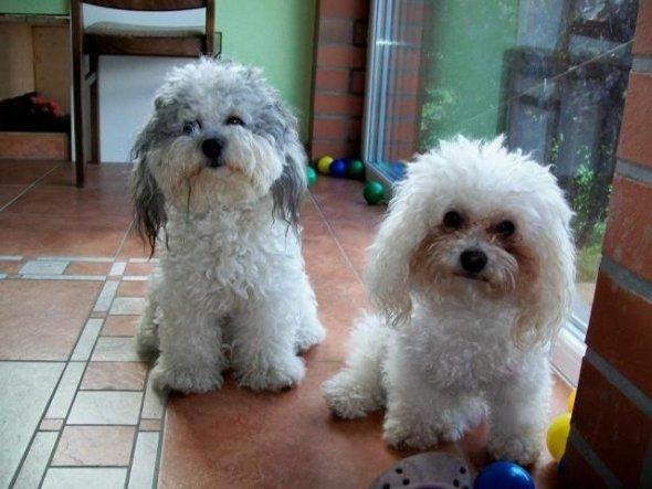 Hier sind links Becky und rechts unsere Deasy zu sehen. Becky ist 2 Jahre alt und Deasy ist auch 4 Jahre alt.