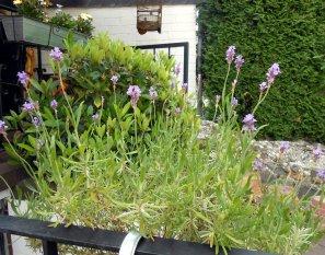 Garten Kunterbunt
