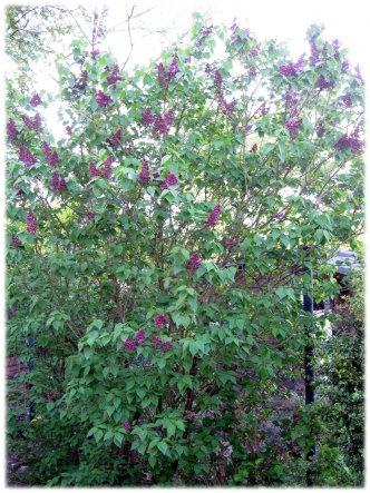 Garten 'Garten Kunterbunt'