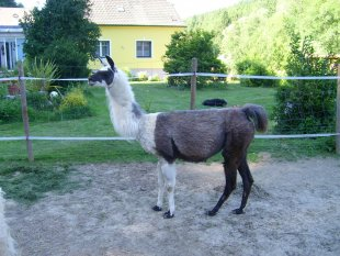 Lama Ranch
