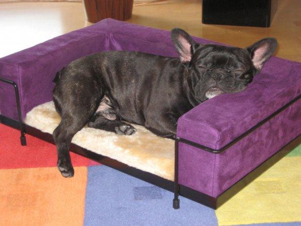 Wotan hatte so ein kuscheliges Sofa. Und Matthias mußte aufs kalte Ledersofa.