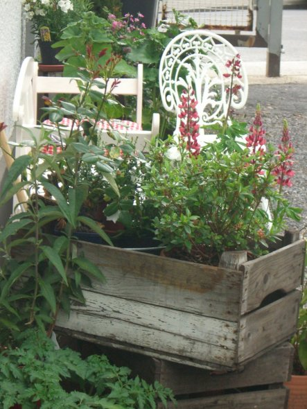 Ranken Blumen Garten : garten 39 garten 39 altes fabrikgeb ude jetzt mein zu hause zimmerschau ~ Whattoseeinmadrid.com Haus und Dekorationen