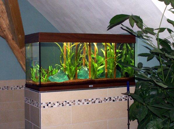 In meinem Aquarium leben 3 Goldfische; es steht auf einer Trennmauer zwischen Toilette und Badewanne und ist ein schöner Blickfang.